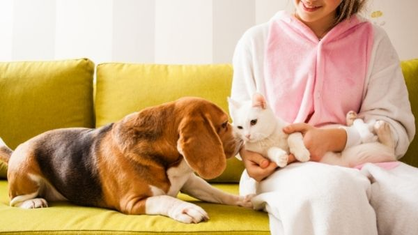 Are Beagles good with cats?