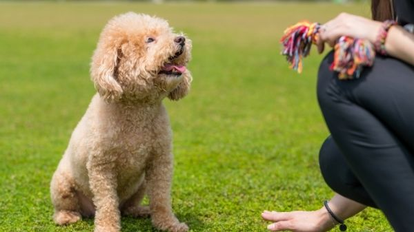 Puppy Training Commands
