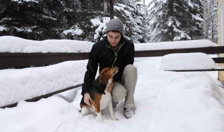 Are Beagles Friendly?